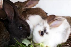 Маленькие кролики едят