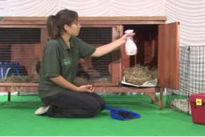 Уборка и чистка клетки животных