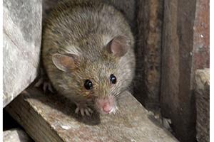 Как ухаживать за мышками ? Как избавиться от темных пятен подмышками: простые рекомендации ? Уход и воспитание