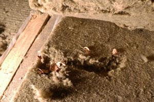 Дыры в минераловатной плите