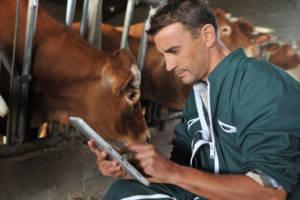 Ветеринар делает записи у коров