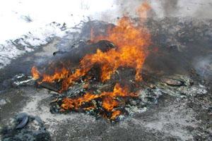 Сжигание павших коров