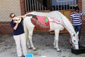 Наглядное строенеи лошади