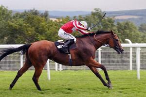 Быстрые скачки на лошадях