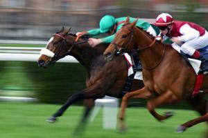 Гонки на конях