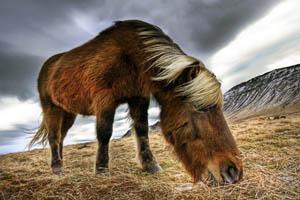 Дикая лошадь на пастбище