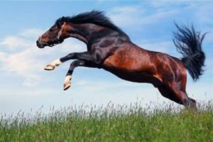 Скачет гнедой конь