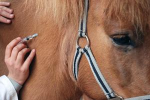 Болеют ли лошади гриппом thumbnail