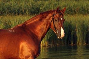 Как назвать коня