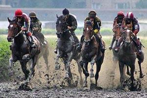 Имена дял спортивных лошадей