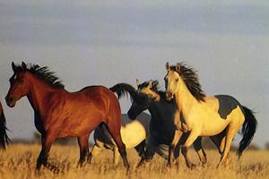 Скачут кони