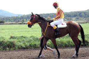 Верхом а коне