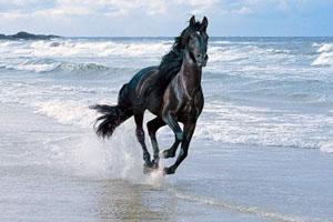 Средняя скорость лошади
