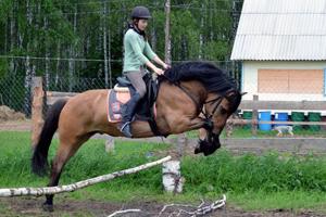 Преодоление препятствия вятской лошадью