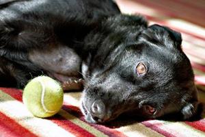 Симптомы инсульта у собаки